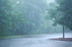 Hadeeth: The Example of Guidance And Knowledge With Which Allaah Has Sent Me is Like Abundant Rain Falling On The Earth